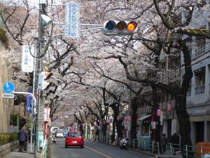 tokyo-march-april-2009-070